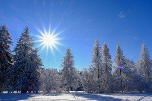 winter, sun, trees
