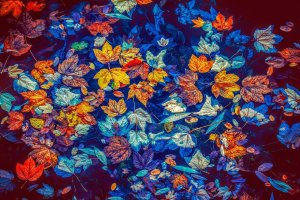 leaves, autumn, water-3744649.jpg