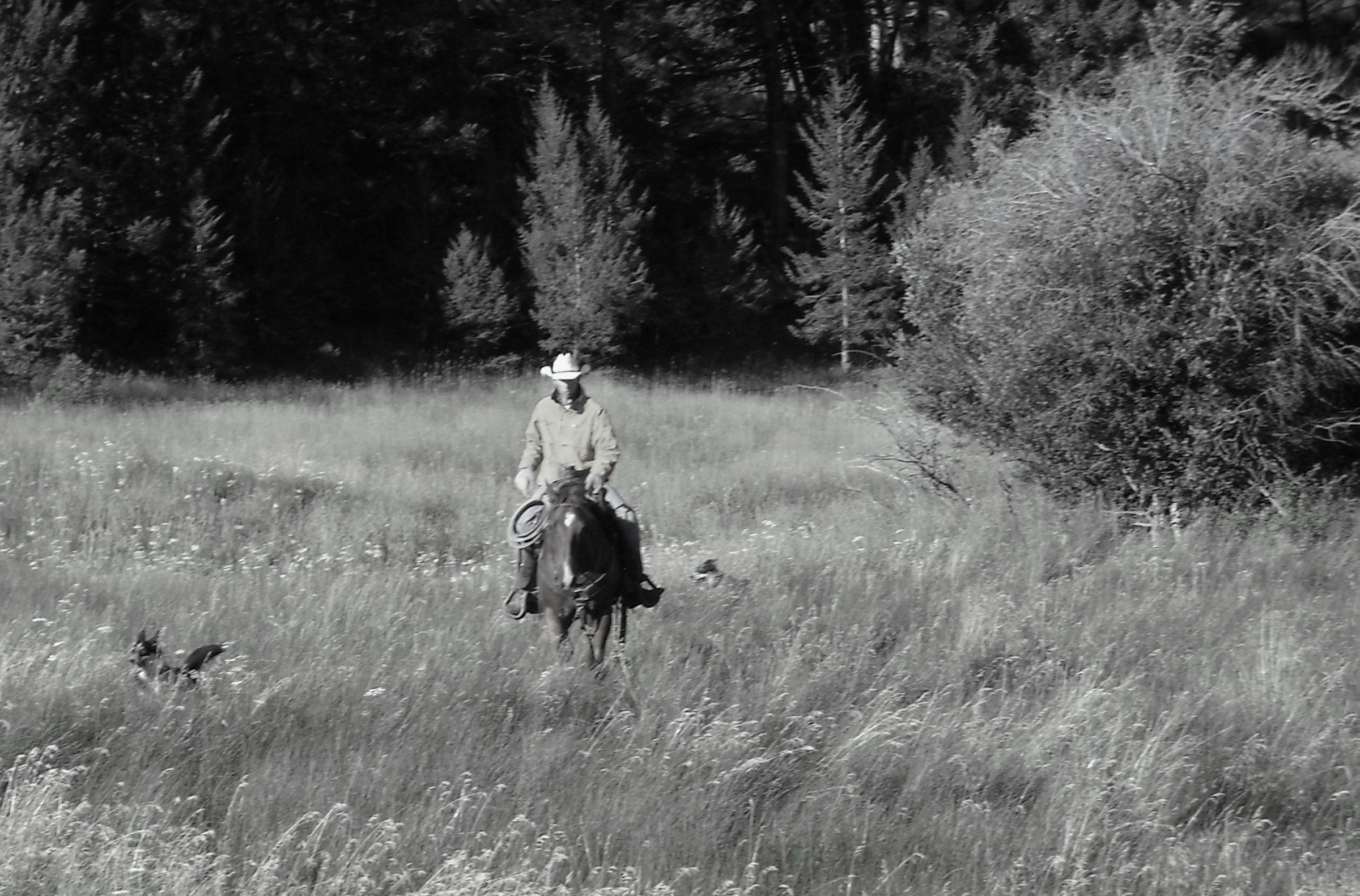 riding - lone rider (2)