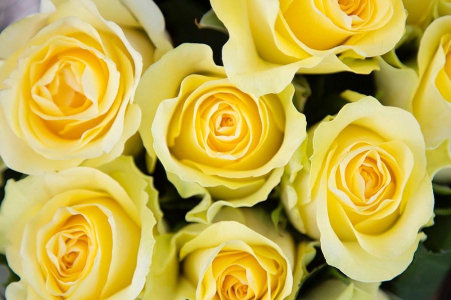 Rose Minion
