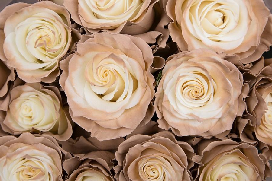 Rose Mondial Truffle