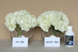Floralife Quick Dip Test