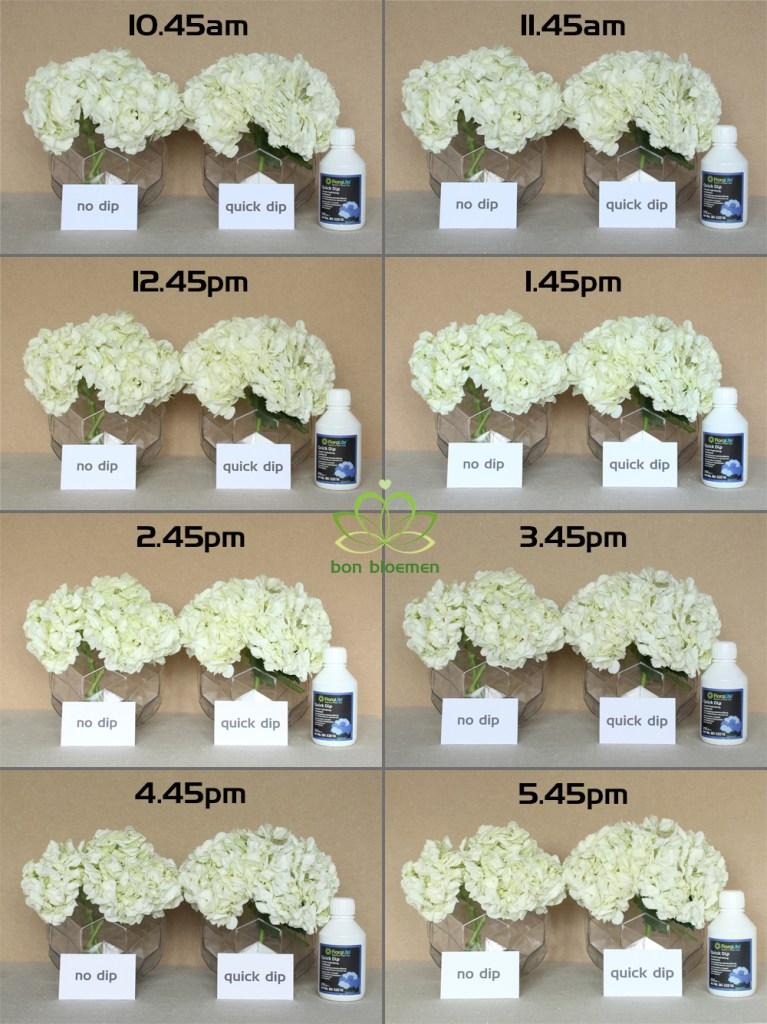 Floralife Quick Dip Test