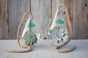 Hanging Pyramid Vases