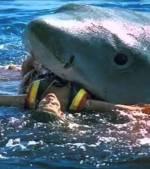 Bikini-Model-Shark-Attack-Off-Bondi-Beach-Australia-Real-Or-Fake
