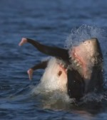 10-Most-Dangerous-Beaches-for-Deadly-Shark-Attacks