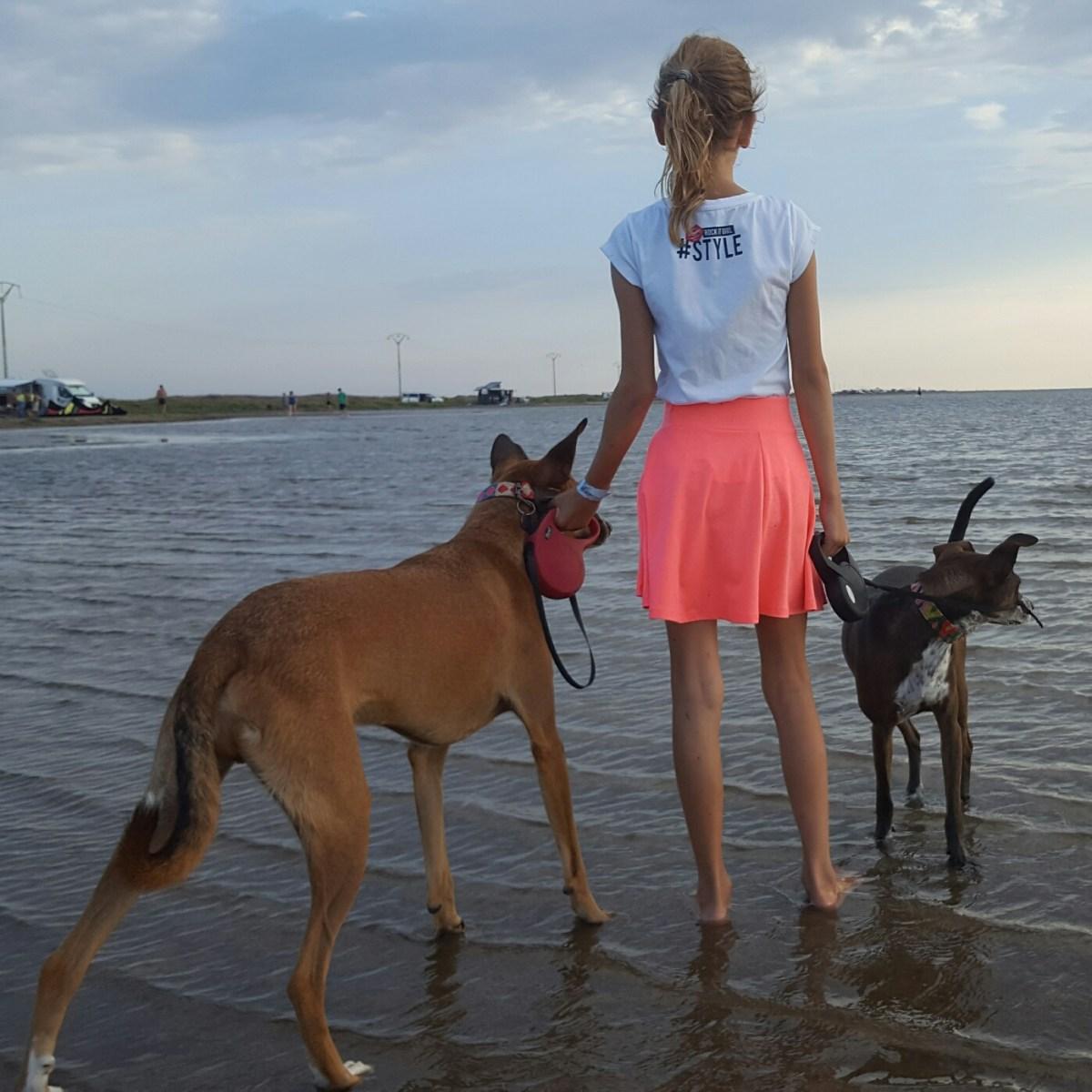 Hondenstrand: ook de hond heeft vakantie