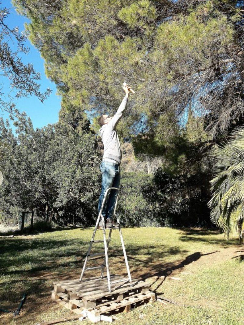 Processierups in Spanje | Oorlog aan ruspje nooit genoeg
