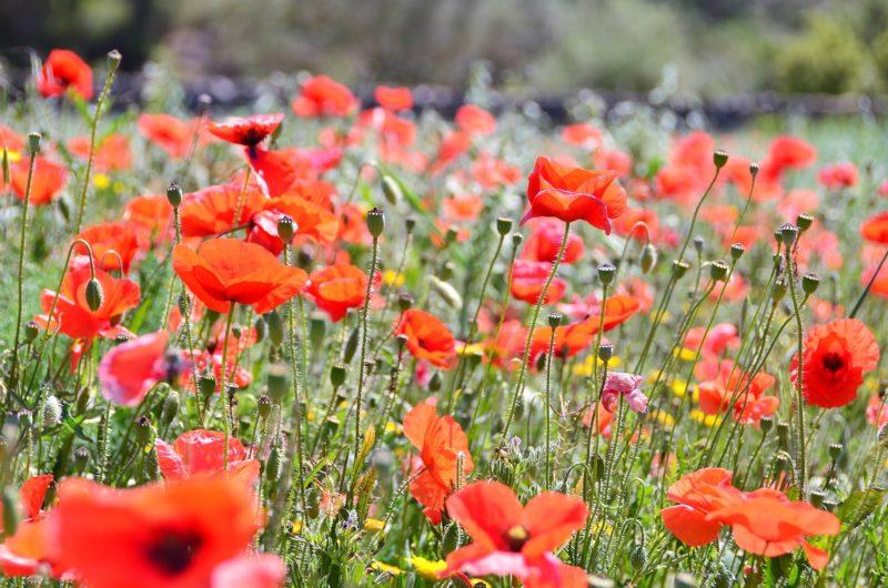 Red Travelpics Tarragona BDT in beeld