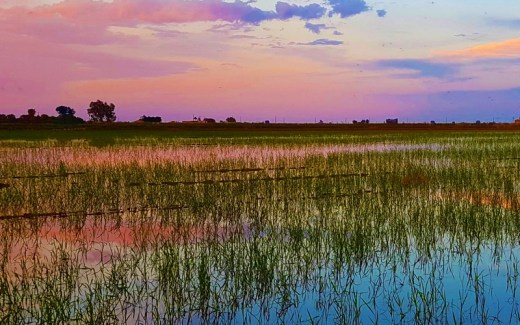 Rijstvelden in Delta del Ebro