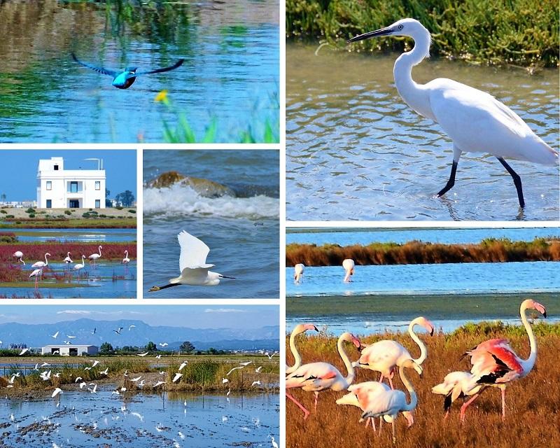 Vogels spotten in de lagunes rondom eco Museum MonNatura