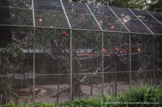 Jurong Bird Park-0527