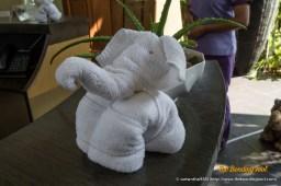Elephant towel.
