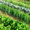 Resolve the issue of fertilizer subsidy crisis fears