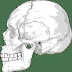 Bones In Our Body