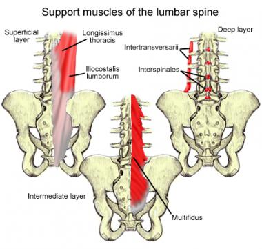 Cervical Spine Muscles Lumbar Spine An...
