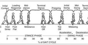 Normal Gait Cycle
