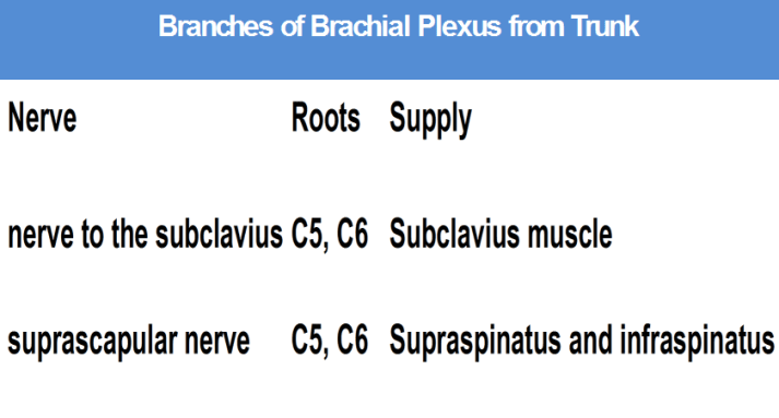 Branches from trunks of Brachial Plexus