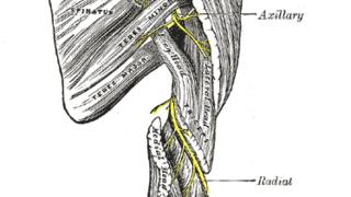 Suprascapular Nerve – Anatomy & Clinical Significance