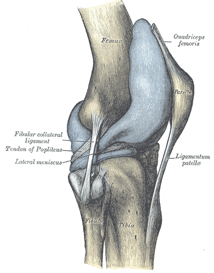Lateral aspect knee