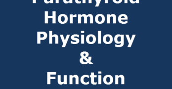 Parathyroid Hormone Physiology and Function