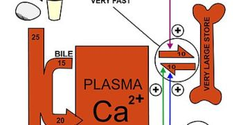 Calcium Homeostasis – Physiology and Disorders