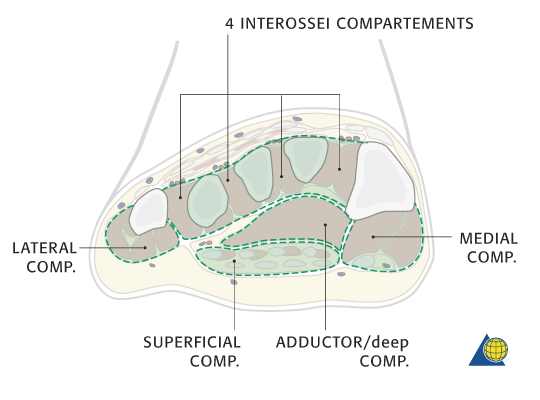 Compartments of Foot