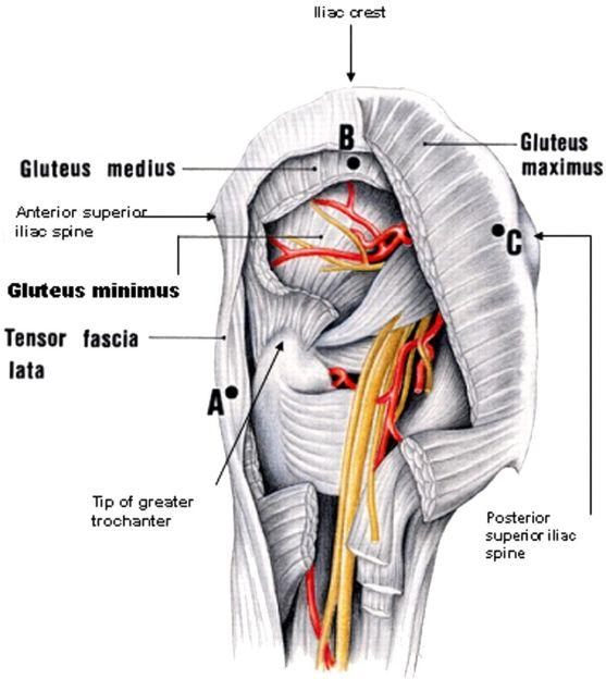 Gluteal compartment region