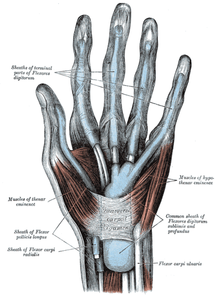 synovial sheaths of hand