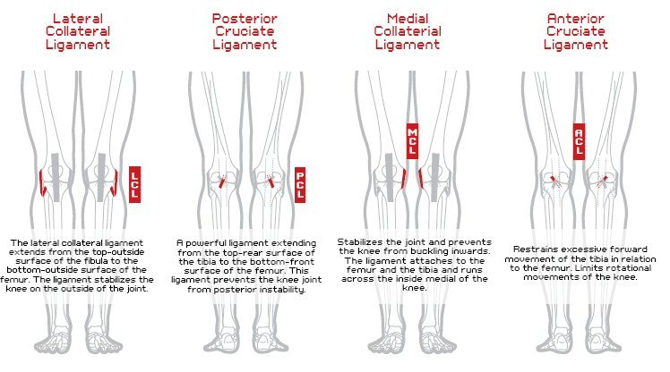 knee ligament stability