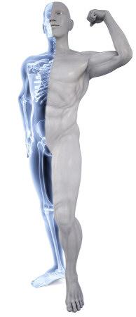strong-bones