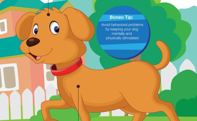 Exercise For Dogs Why It S Important Boneo Canine