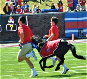 Handlers run the live Mustang mascot after an SMU score. (Photo by Al Myatt)