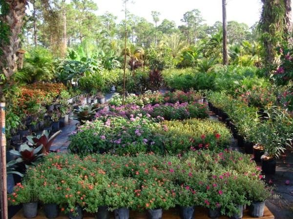 bongard landscaping- nursery