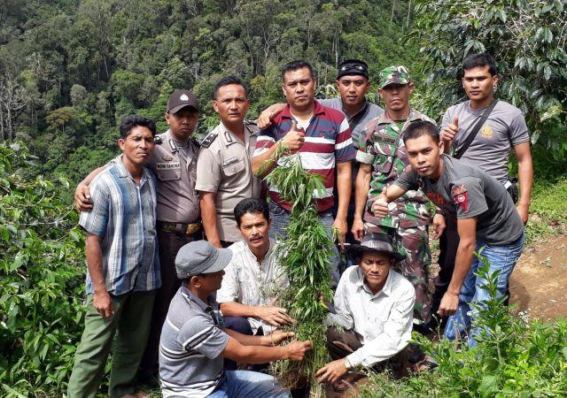 Tim Gabungan Koramil 09/PRG dan Kepolisian Bener Meriah Temukan Ratusan Batang Tanaman Ganja