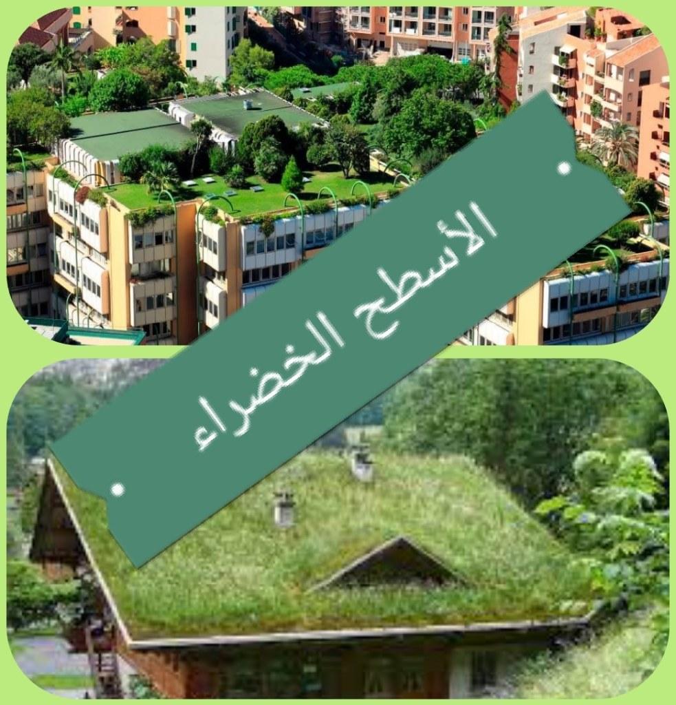 الأسطح الخضراء: أنواع، مميزات، عيوب وطريقة البناء