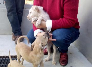 Centro de Control y Bienestar Animal