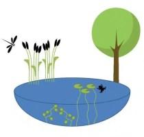 Les mares encouragent la biodiversité