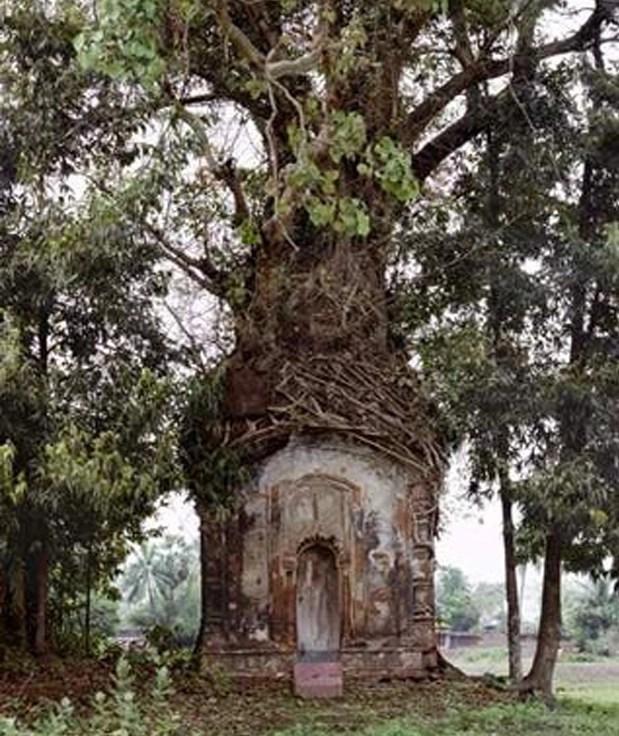 Case sugli alberi 35 Foto  Bonkadaycom
