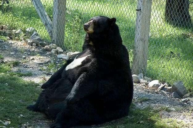 Animali troppo grassi per fare qualsiasi cosa 34 foto  Bonkadaycom