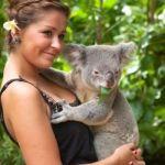 シドニーではコアラは抱っこできない!ブリスベンからコアラを抱っこしに行く方法