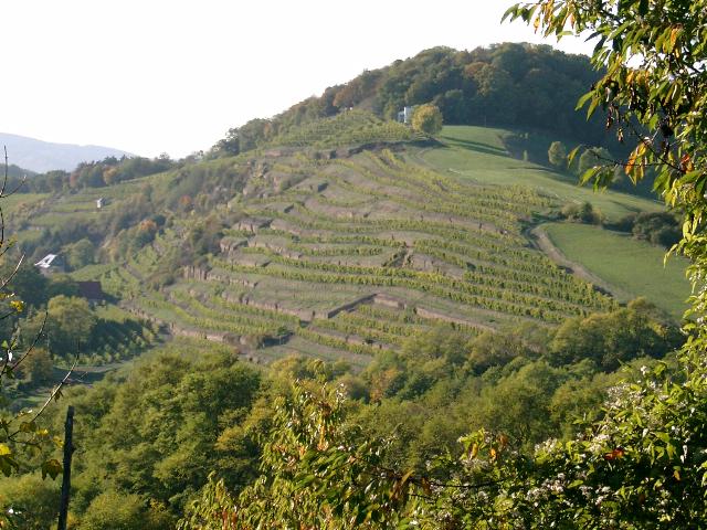 Winnica Odernheimer Kloster Disibodenberg. © Weingut von Racknitz