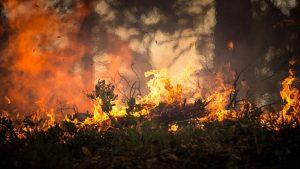 Warum brennt der Wald?