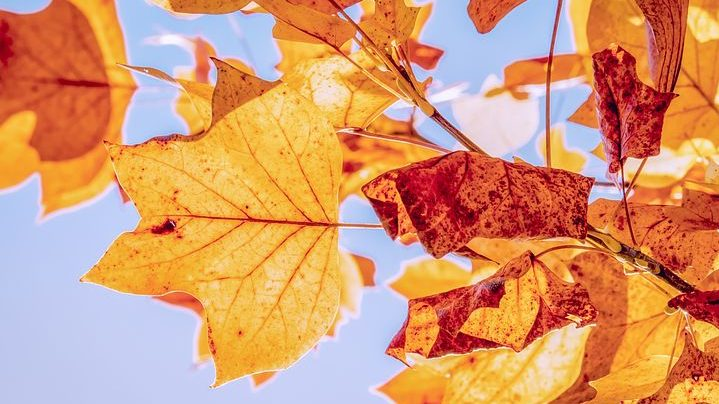 Mein jährlicher Stimmungskiller – der Herbst