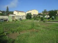 Le jardin au matin