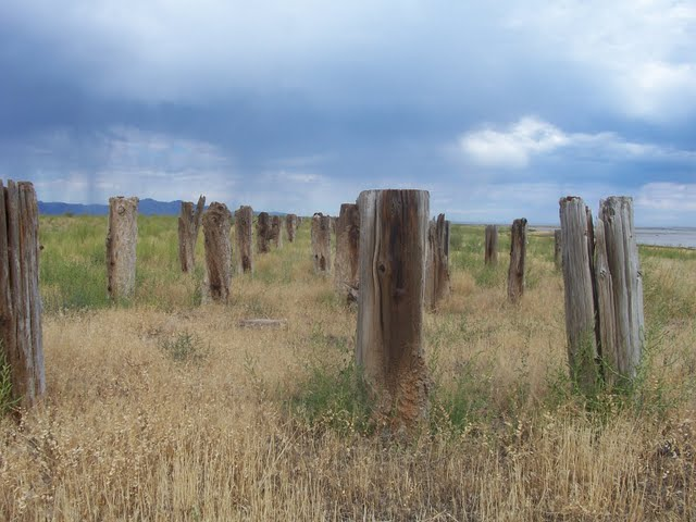 Wooden pilings line the old trestle that leads to the site (photo by Clint Thomsen)