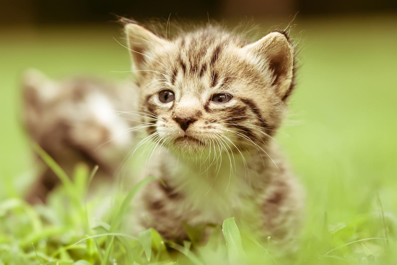 Cute Cat Wallpaper Backgrounds Er Det En Han Eller Hun Kat Bonnie Dyrecenter