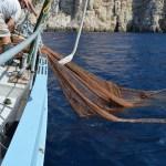 Conservación Marina