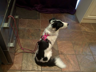 Hurtta training rope lead / leash tether