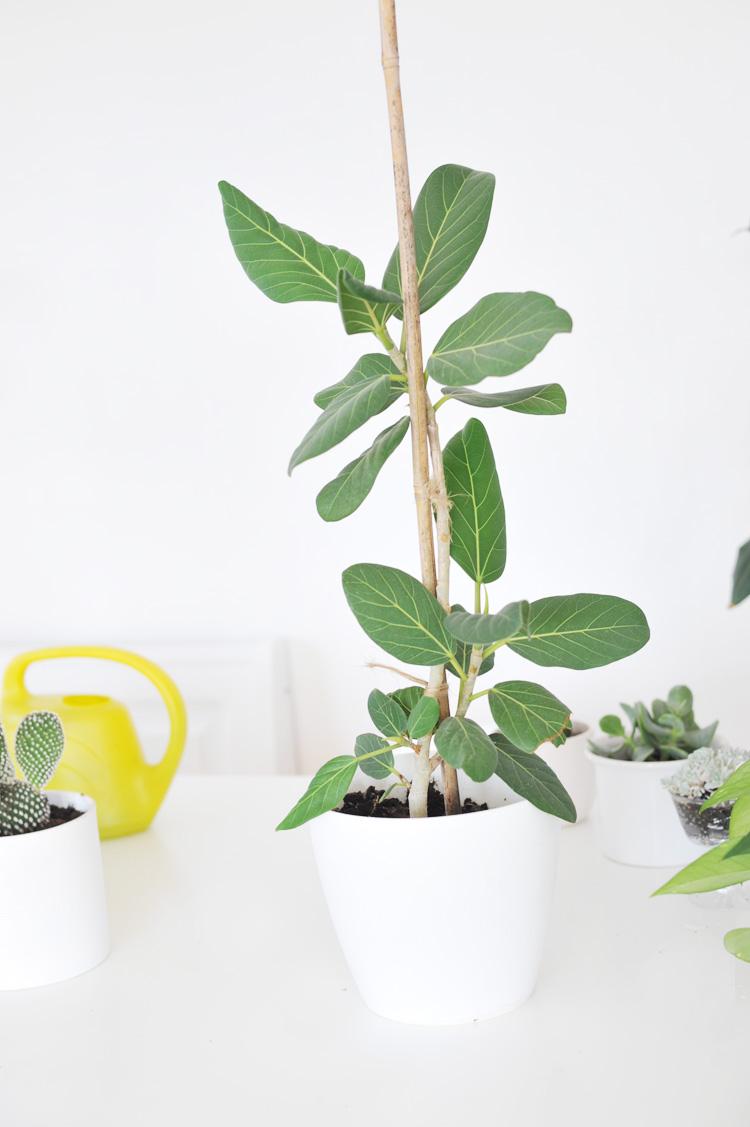 Pflanzen Die Viel Sonne Vertragen pflanzen die viel sonne